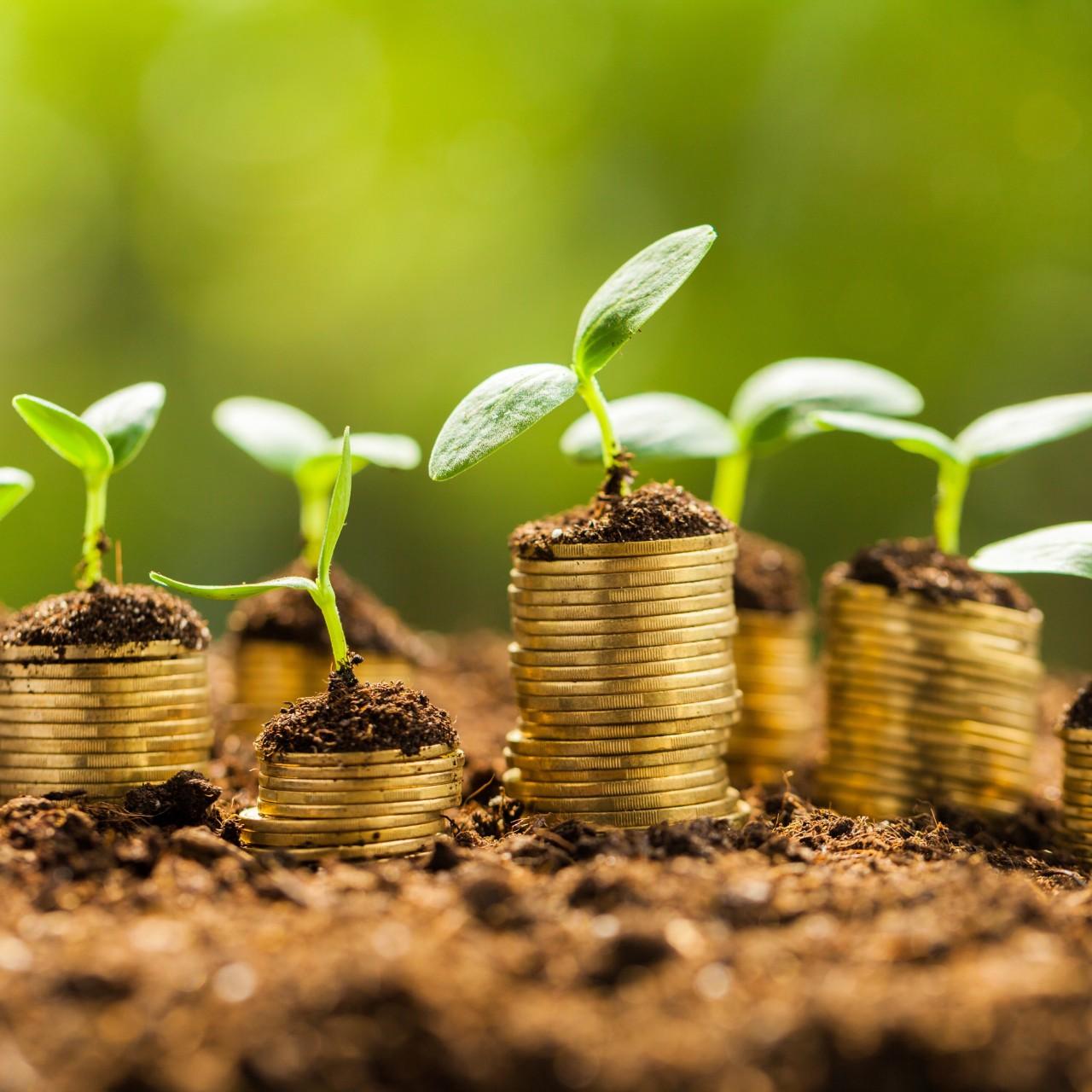 groeien subsidies_square